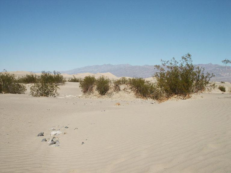 Die Sand Dunes im Death Valley