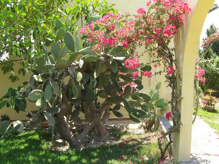 Der Garten unserer Finca