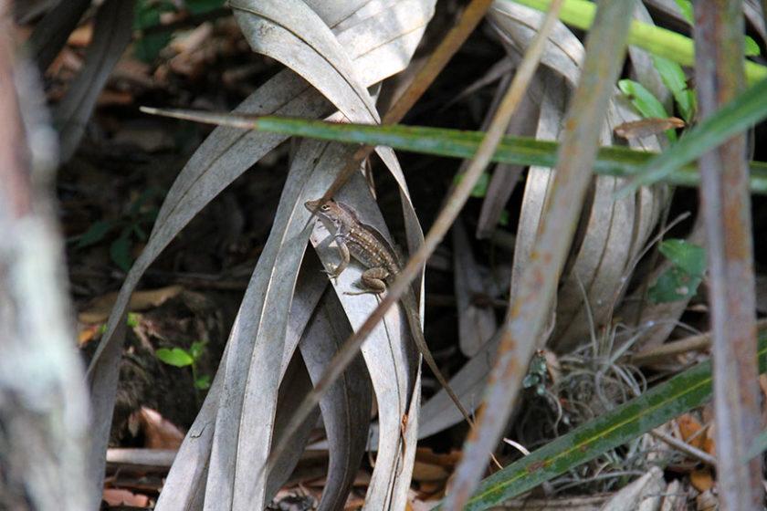 Meritt Island National Wildlife Refuge