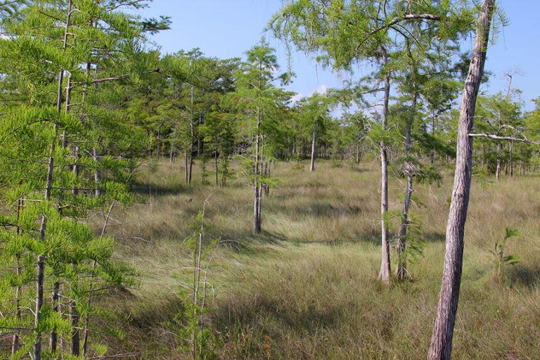 Am Rande der Everglades