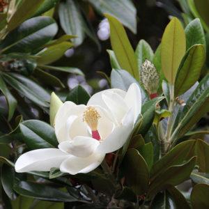 Pflanzenpracht in Sydneys Royal Botanic Garden
