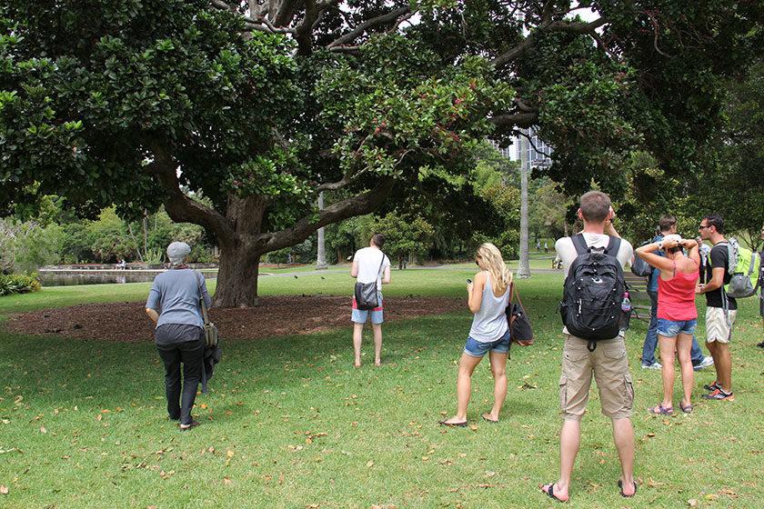 Ziemlich viele Mini-Papageien im Royal Botanic Garden