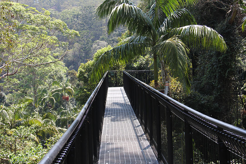 Tamborine Mountain National Park
