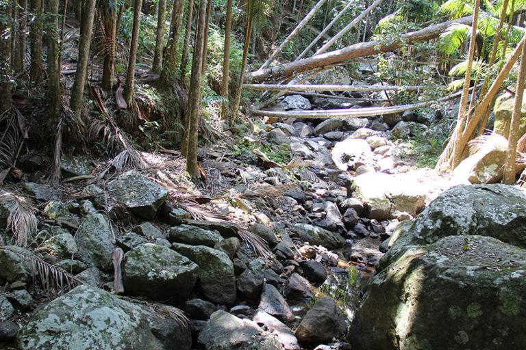 Tamborine Mountain National Park