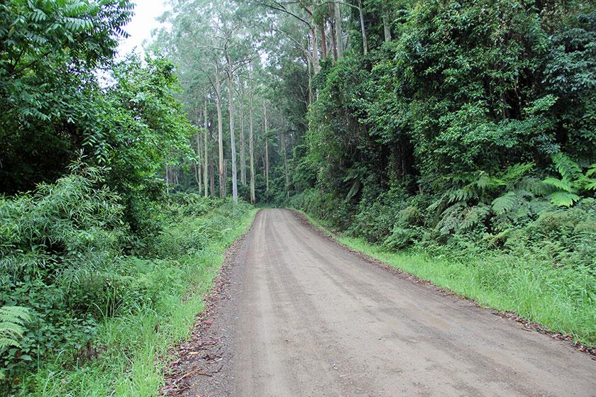 Durch den Regenwald zu den Ellenborogh Falls