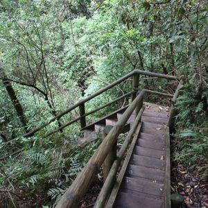 Der Abstieg zu den Ellenborogh Falls