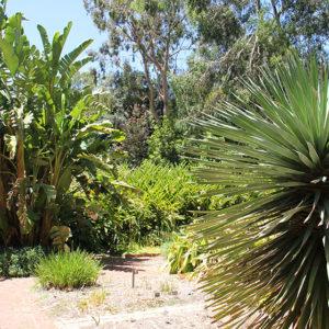 Botanischer Garten Adelaide