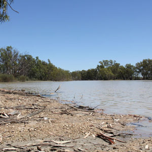 Der Murray River