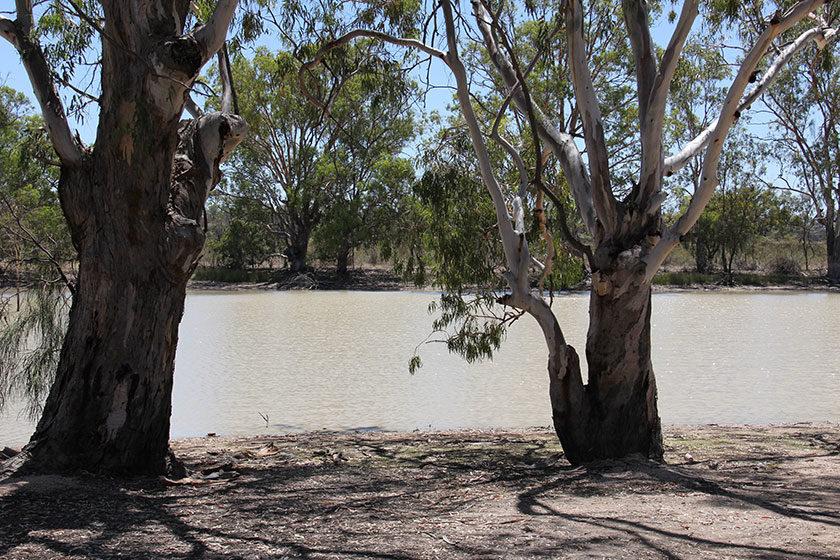 Der Murray River