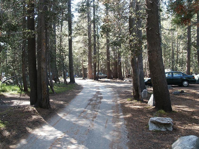 Miten im Wald: Der White Wolf Campground
