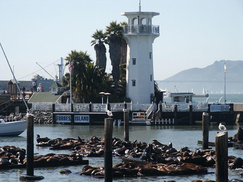 Die Seehundbänke an der Fisherman's Wharf