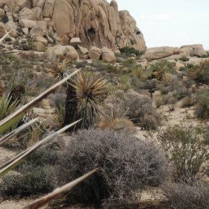 Wanderung im Joshua Tree N.P.