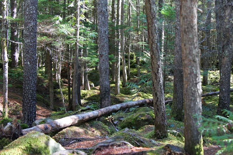 Wald bei den Brandywine Falls
