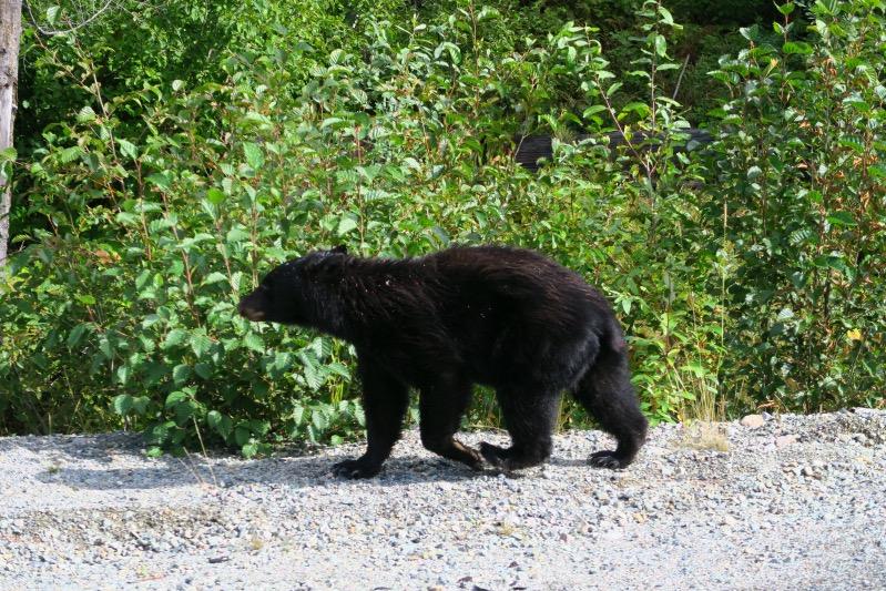 Unser erster und einziger Bär