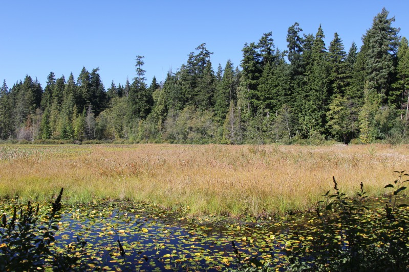 Beaver Lake im Stanley Park
