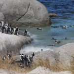 Pinguine und Guesthouse-Suche in Simon's Town