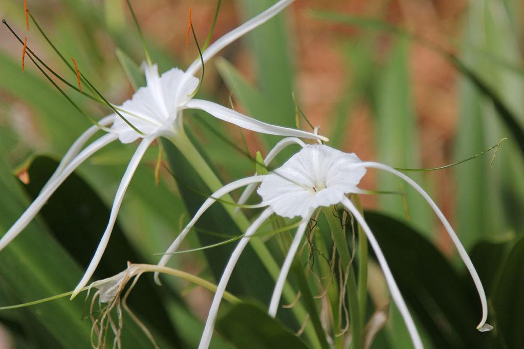 Botanischer Garten Stellenbosch