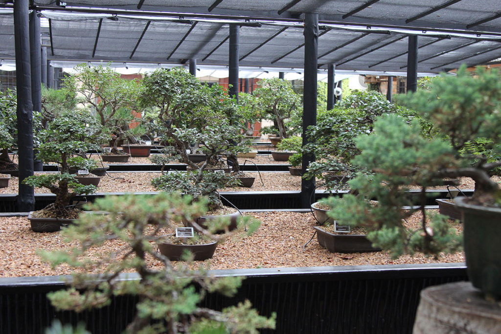 Die Bonsai-Ausstellung