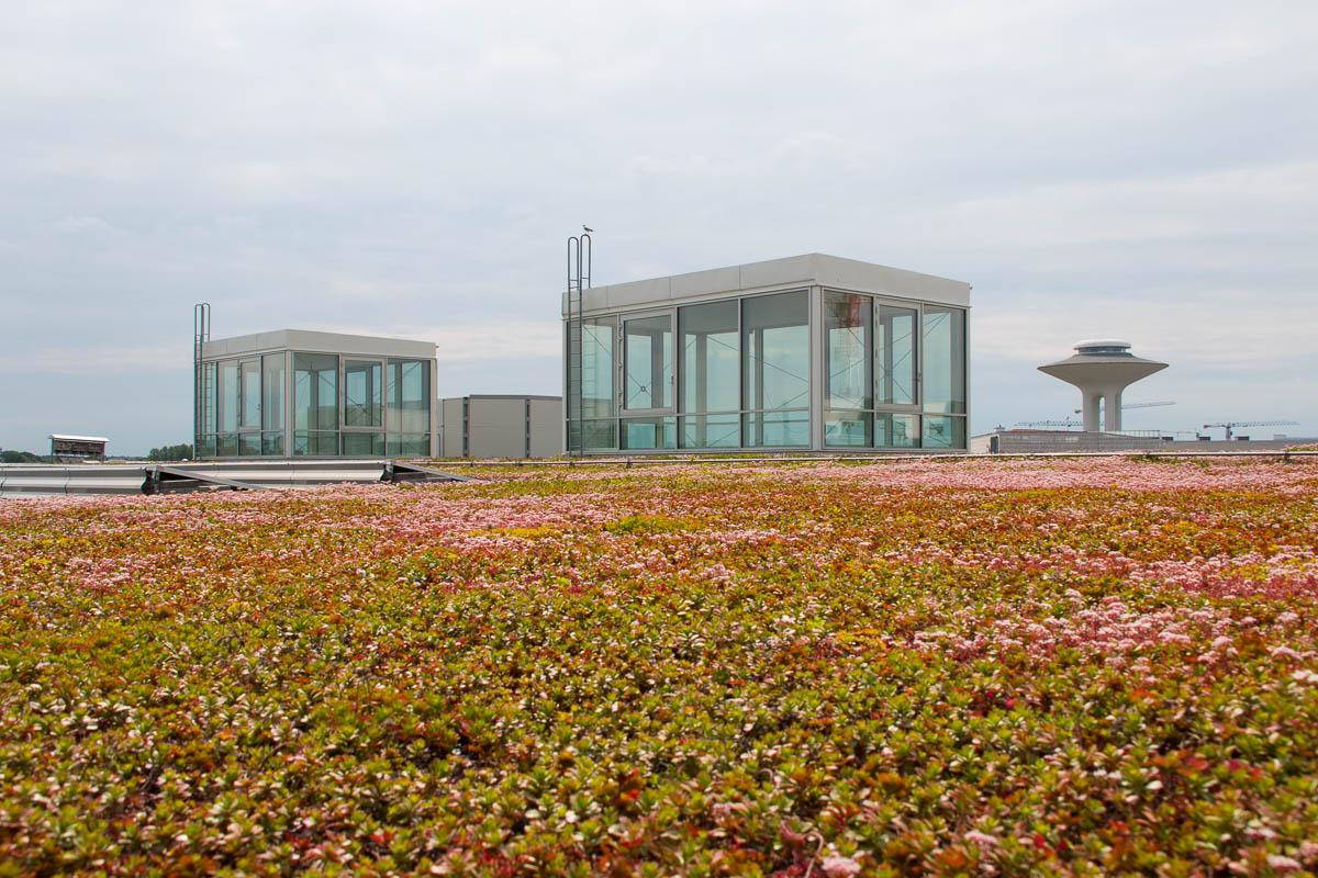 Grünes Schwimbaddach mit Photovoltaik-Anlage