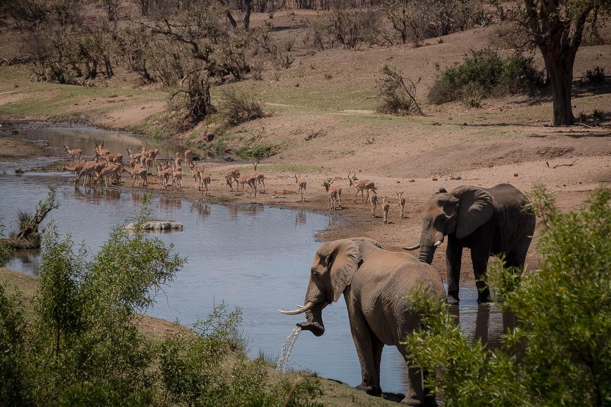 Überwältigende Tierwelt im Krüger Nationalpark