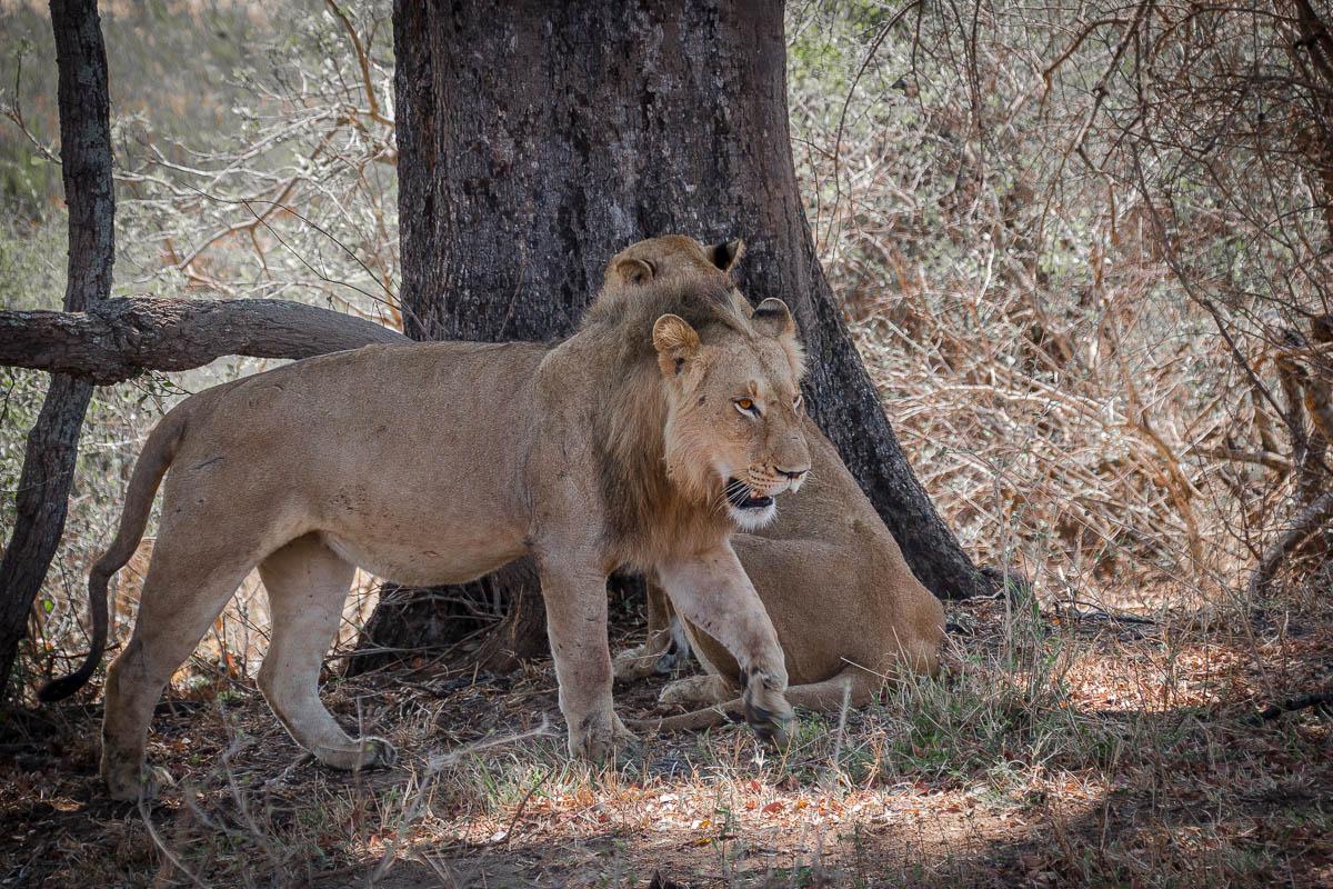 Den Big Five auf der Spur im Krüger Nationalpark