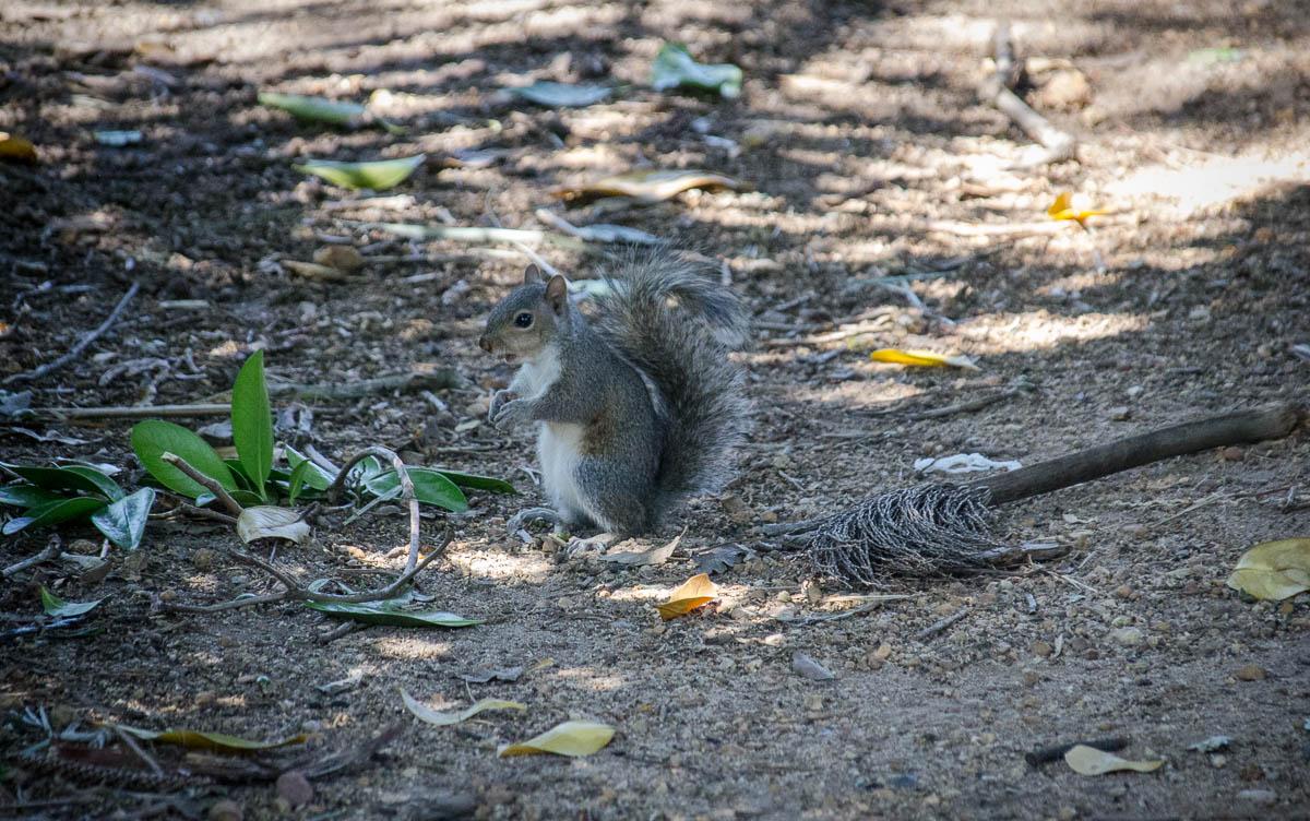 Squirrels in Company's Garden
