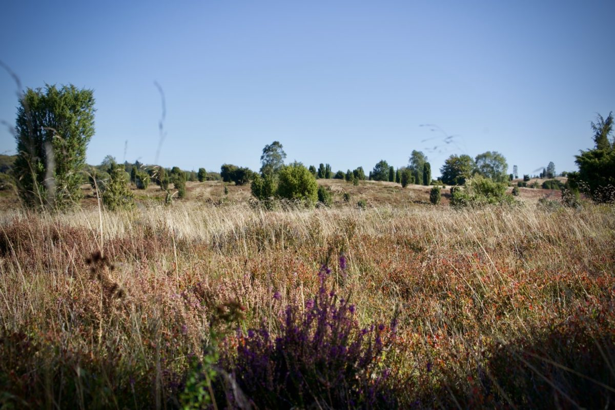 Lüneburger Heide bei Undeloh