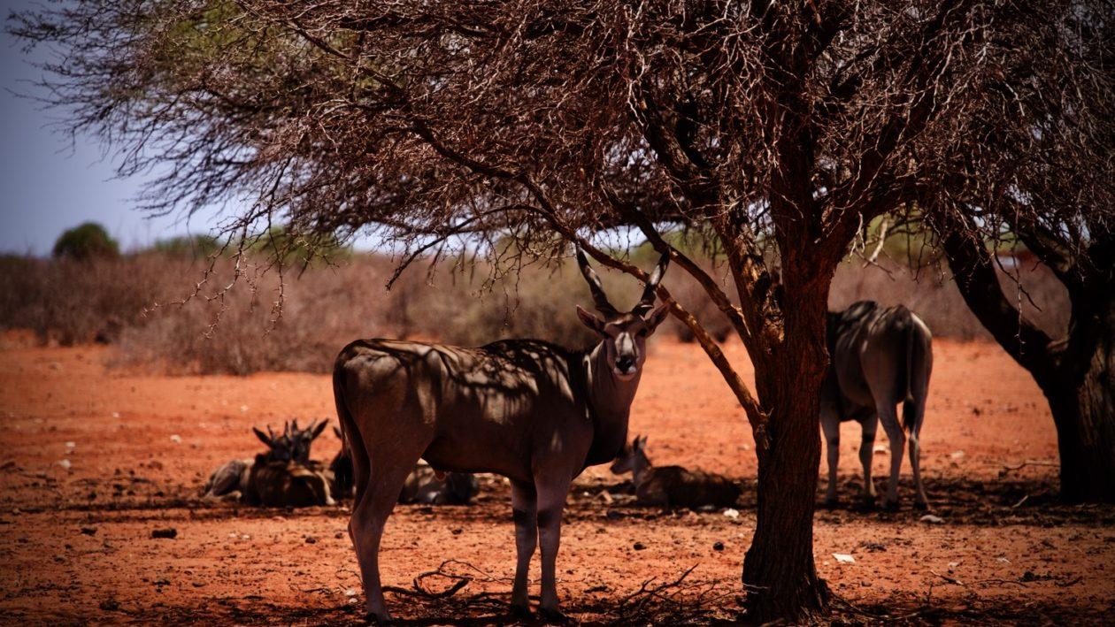 Das Abenteuer Namibia
