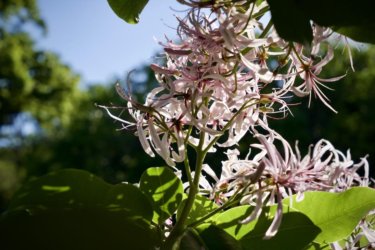 Der Botanische Garten Kirstenbosch
