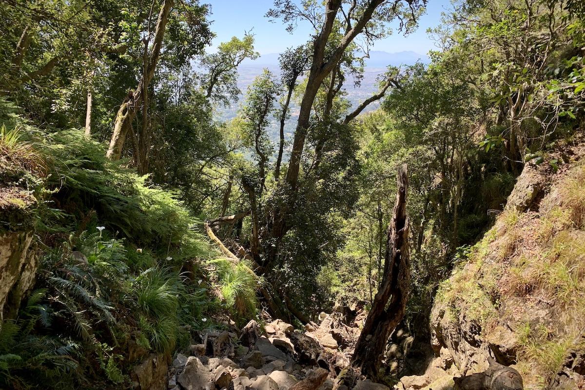Zu Fuß auf den Tafelberg - Ein bischen über Steinchen klettern...