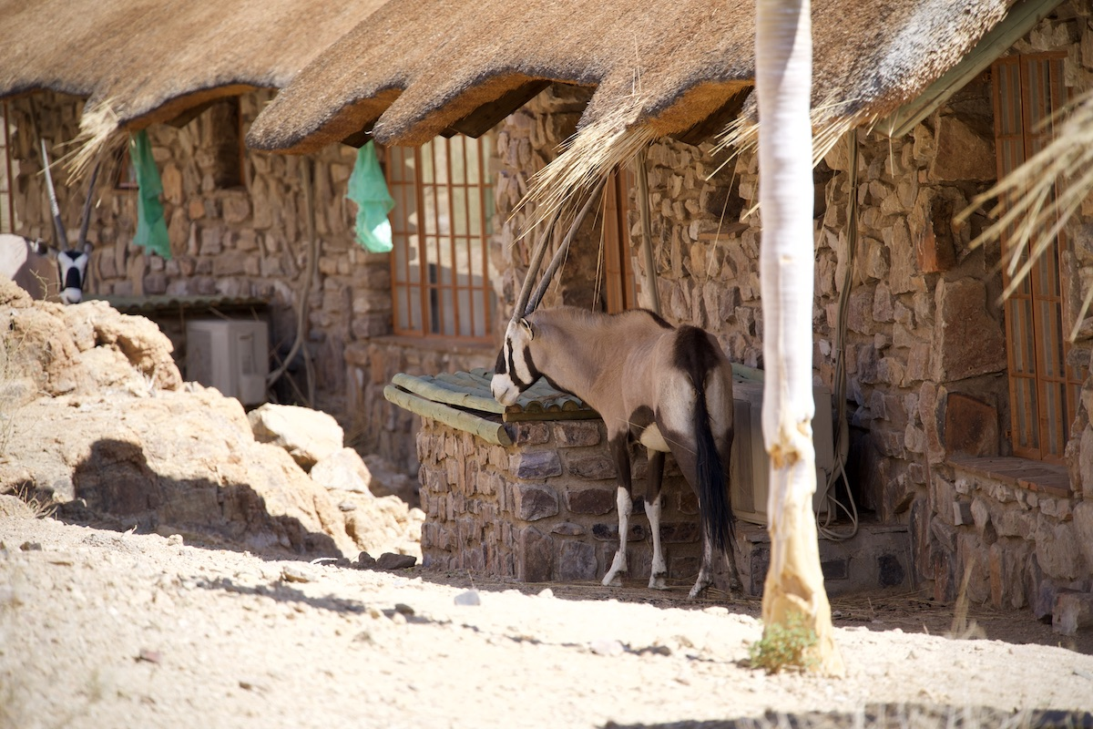 Namibia - Oryx