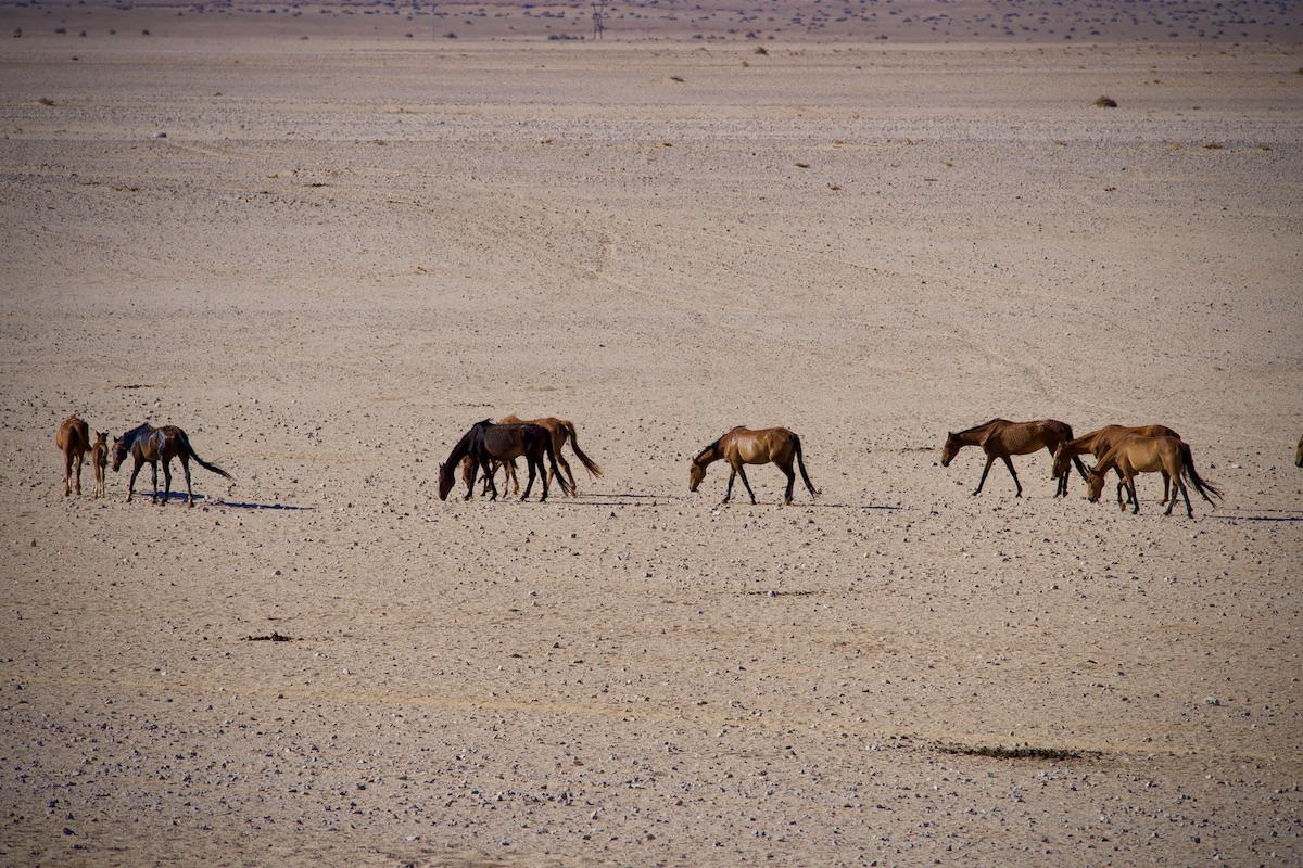 Die Wildpferde von Garub