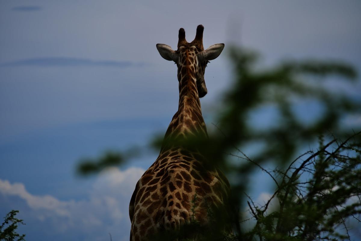 Ciao Etosha National Park